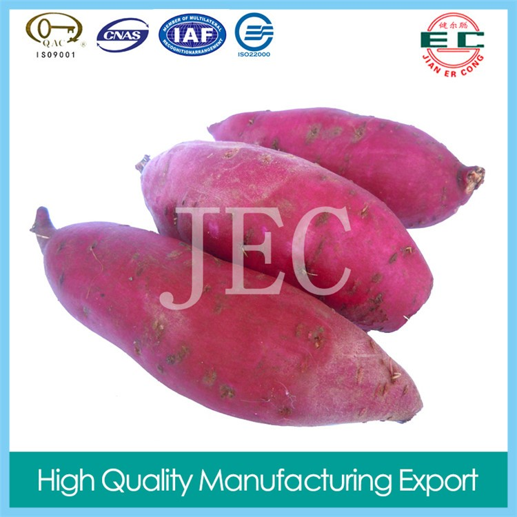 new crop purple sweet potato