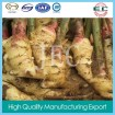 China fresh ginger 2014 supply organic ginger