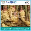China fresh ginger 2014 supply organic ginger