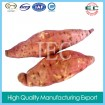 organic vegetables  fresh  sweet potato